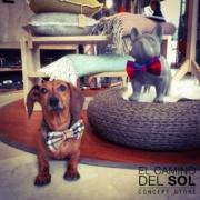 Cani in ceramica | EL CAMINO DEL SOL