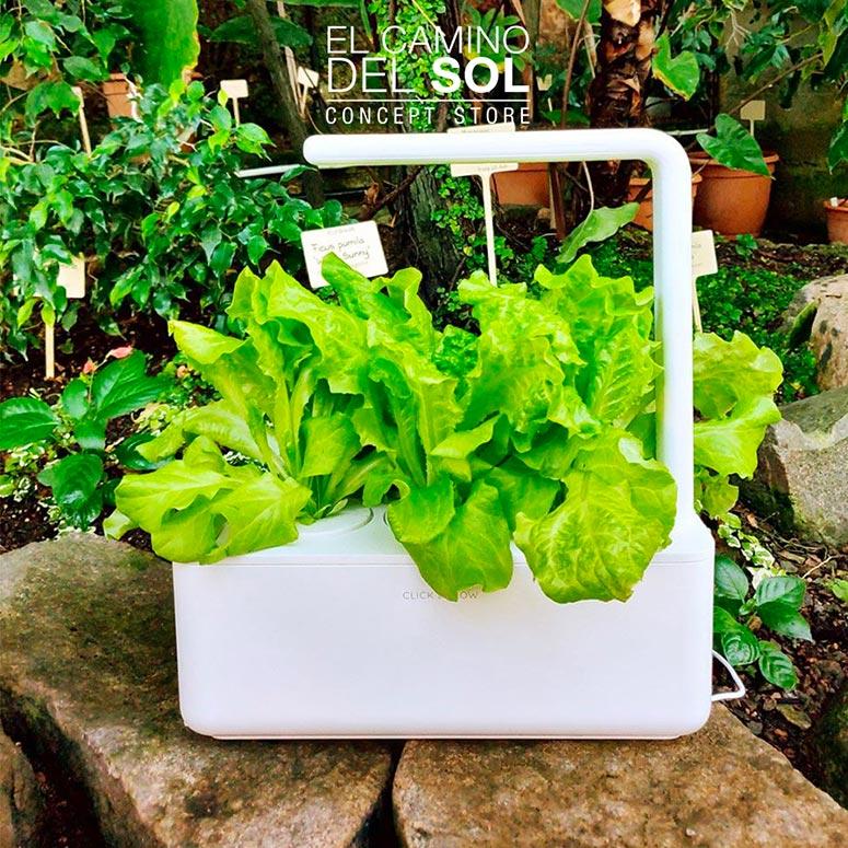 Giardino in idrocoltura Click and Grow | EL CAMINO DEL SOL